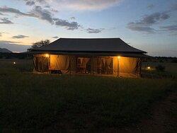 "Serengeti national park ""Into Wild Africa Luxury Tented Camp Serengeti"""