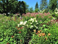Floraison des vivaces, le 7 août 2020