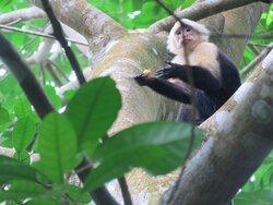Ecoturismo Baru National wildlife refuge