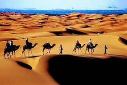 Sahara Holiday Tours