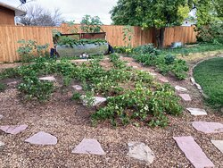Strawberry patch & Pear tree