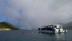 Reef Surfari at Whistling Cay Virgin Islands National Park.