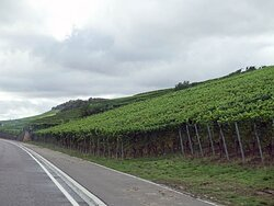 Moselle Valley