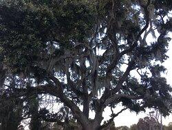 Beautiful Tree outside