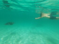 Getting close to the sea turtles