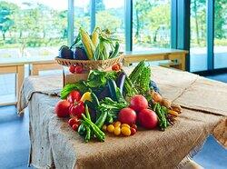 OH!!!~Fermentation, Health and Magic of Food!!!~, OH!!!〜発酵、健康、食の魔法!!!〜