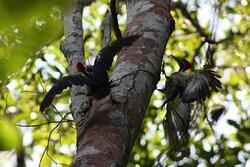 Real Amazon Experience Manaus Jungle Trip