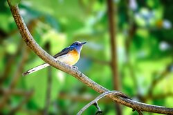 October was the beginning of the fall migration, and each day saw new species appearing, like this flycatcher.