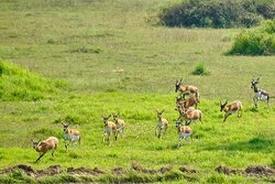 One day, we left the park and went to the nearby blackbuck reserve.