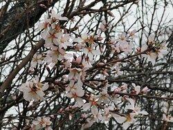 La primavera está llegando.