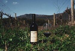 Mount Broke Wines & Restaurant