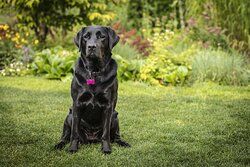 Alta Whistler Experience Guide Dog