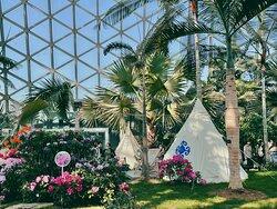 Shanghai Chenshan Botanical Gardens