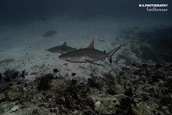 Family Divers Maldives 💙