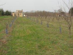 Les Jardins de Beauregard. Vue 31. Vignes et Vergers Plantés aux Jardins de Beauregard, Depuis 1996. Propriété de La Commune et Libre d'Accès. Le Magny 36400.