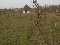 Les Jardins de Beauregard. Vue 26. Une Loge de Vigne Ronde ! Rare ! Vignes et Vergers Plantés aux Jardins de Beauregard, Depuis 1996. Propriété du Magny. Le Magny 36400.