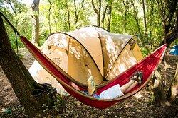 amenez votre hamac pour une sieste au chant des cigales. emplacement ombragé et spacieux
