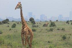 Nairobi National Park.