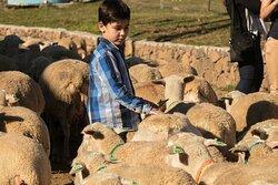 Grande Rebanho: Conheça um verdadeiro rebanho, e vivencie de perto a rotina das ovelhas na fazenda.