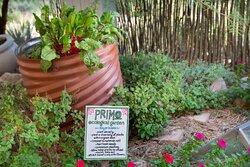 Primo - Herb Garden