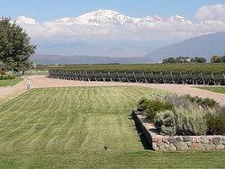 Hermosa vista y vinos