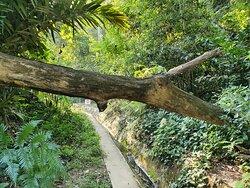 fallen trunk
