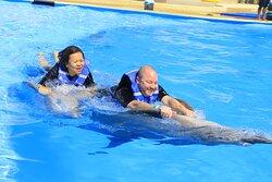 Great dolphin swim