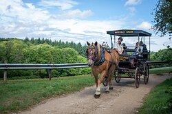Heavy Horse drawn carriage rides   Dorset Heavy Horse Farm Park