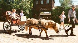 Miniature pony carriage rides  Dorset Heavy Horse Farm Park