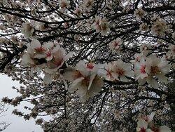No me canso de contemplar la primavera.