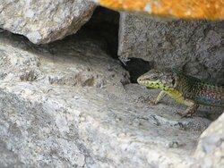 In den alten Steinmauern unterwegs ...