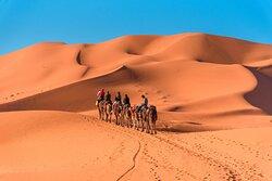 camel ride in  merzouga saha desert