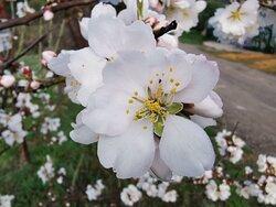 Contemplar la explosión 💥 de la primavera.