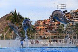 Dolphins mid jump