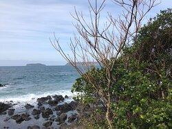 つばきの館周辺から海を撮りました。