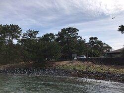 海に突き出た突端(岸壁)からつばきの館方向を撮りました。