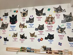 One of the 'cat walls' to introduce the cats.