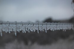 barbed wire iced over
