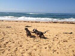Beautiful clean pet friendly patrolled beach