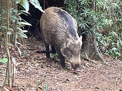 An unexpected wildlife encounter along the hiking trails in the Tai Tam Country Park.