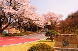 4月上旬~中旬にかけ、進入路のソメイヨシノが皆様をお迎えします。