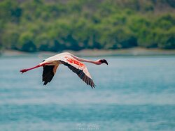 A must visit place for flamingo sightings and photography.