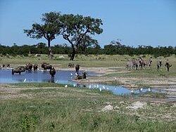 On Safari at Chobe National Park