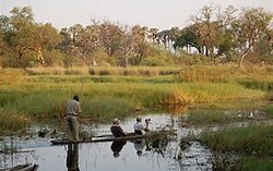 Taking the dugouts to see the Okavango Delta and its nature