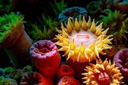 Loving flowers, loving animals, loving ocean, loving life. All love shows in just one shot. Because sometimes nothing is what's look like. Los Arcos. March 2021. #BanderasScuba  #Banderasscubarepublic #PVScuba #PADI #PVPADI #PADI5star #ScubaVallarta #pvscubadiving #PuertoVallarta #BuceoPuertoVallarta #vivanaturamexico #vivanatura #divepv #lovenature #visitpv #reeflife #easternpacific