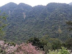 園區對望山景