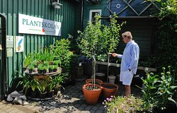 Plantskola