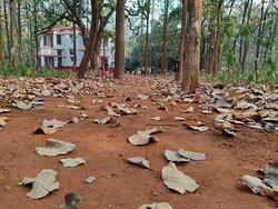 Durgabari thru Sal forest