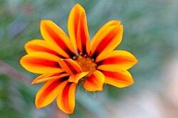 Detalle de las flores del Jardin del Lodge