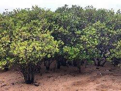 Lai Chi Wo Nature Trail - mangroves